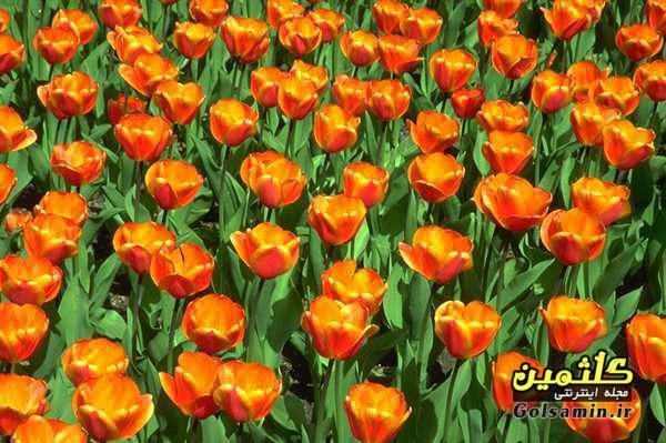 گالری عکس گل