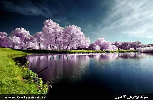 زیبایی های طبیعت (۱)
