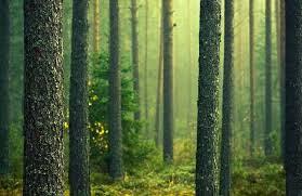معمای جنگل