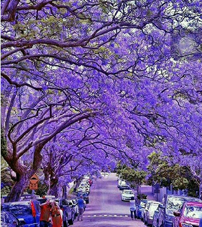 زیباترین خیابانها در کشورهای مختلف جهان (۱)
