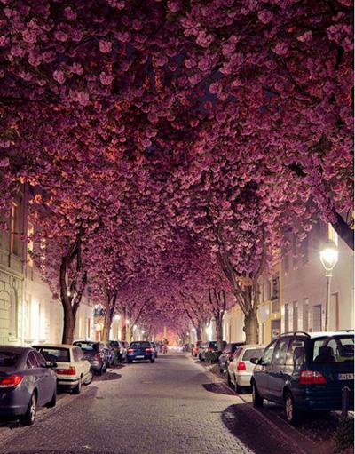 نگاهی به زیباترین خیابان ها در کشورهای مختلف جهان