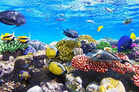 دریای سرخ, ماهی های دریای سرخ شمالی,عکس های دریای سرخ