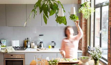 گیاهانی برای آشپزخانه,آشنایی با گیاهانی برای آشپزخانه