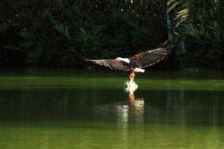 کنیا,کشور کنیا,دریاچه ناکورو کنیا