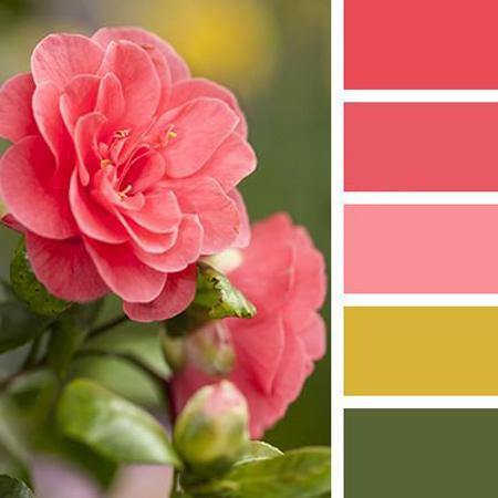 ترکیب رنگ های مناسب چیدمان صورتی,چیدمان خانه با رنگ صورتی