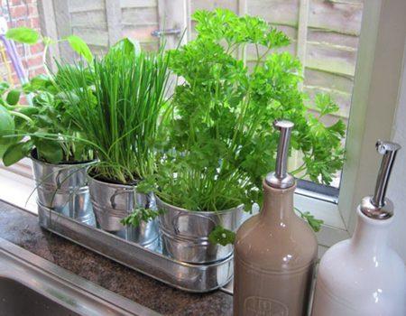 کاشت گیاهانی برای آشپزخانه