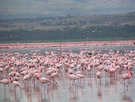 کنیا,کشور کنیا,پارک ملی ناکورو