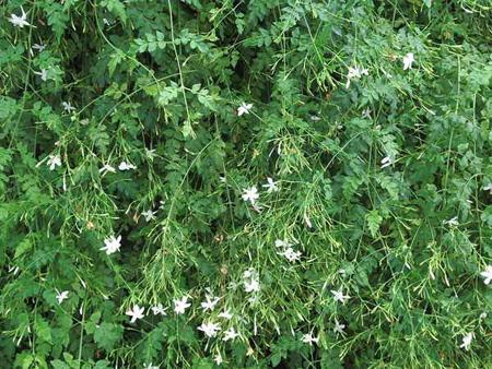 کاشت و نگهداری از گل ها در تراس و بالکن,کاشت و پرورش گل و گیاهان