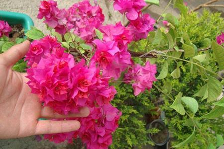 گلهای مخصوص تراس, گل و گیاهان مخصوص تراس