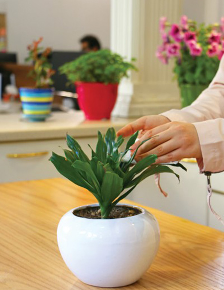 تمیزکردن گلهای اپارتمانی,نحوه تمیزکردن گلهای اپارتمانی