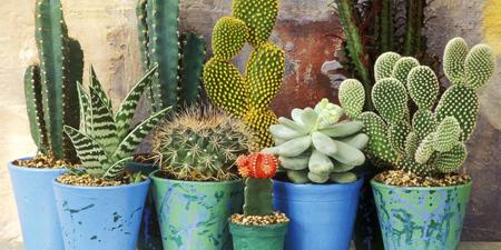 تکنیک های نگهداری از گیاهان,نگهداری از گل و گیاهان