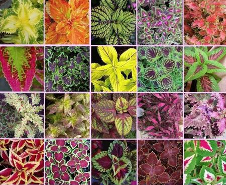 نگهداری گیاهان در پاییز و زمستان,نکاتی برای نگهداری از گل و گیاهان