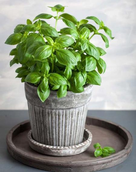 گیاهانی برای درمان استرس, نحوه درمان استرس