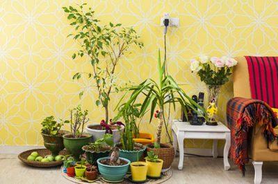 گل و گیاهان در پاییز و زمستان,نگهداری از گل و گیاهان آپارتمانی