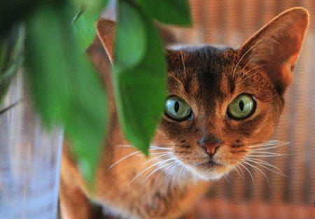 گیاهان سمی برای حیوانات,گیاهان سمی خانگی برای گربه