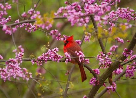 کاشت گل های بهاری در پاییز, آشنایی با زمان و نحوه کاشت گل ها