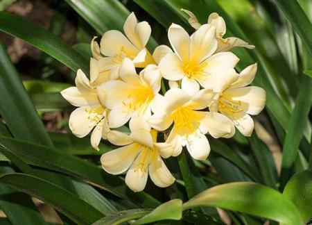 نکاتی برای کاشت گیاهان,روش های کاشت گل و گیاهان