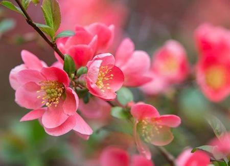 گل های بهاری,کاشت گل های بهاری در پاییز