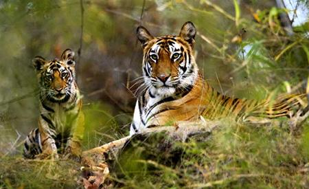 هند,کشور هند,پارک ملی کانها