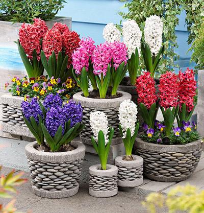 نکاتی برای کاشت و خرید گل سنبل